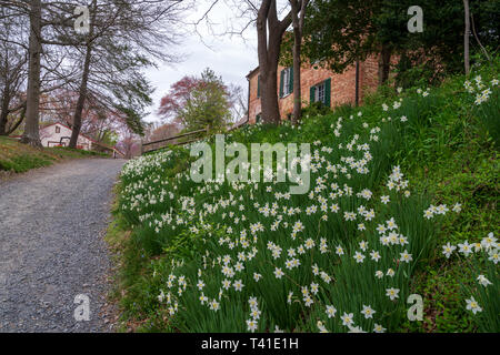 A gray gravel path in Colvin Run Mill winds past a flower bed and a mill house on a spring day in Virginia. - Stock Photo