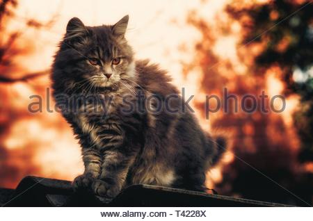 long-fur black cat on top of roof - Stock Photo