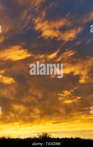 Golden and dark coloured Fire Clouds seen at sunset on one Summers evening near Arbroath, Angus in Scotland. August. - Stock Photo