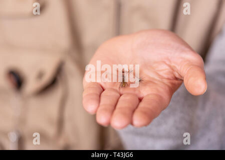 Fisherman showing fishing fly hook in hand palm . - Stock Photo