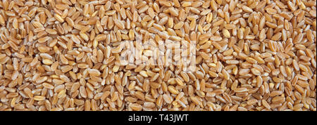 Raw wheat dry grains full frame background, banner. Close up top view - Stock Photo