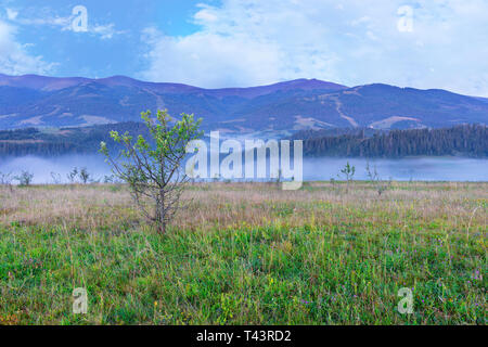 A green meadow and a growing young tree on a hill in the background of the mountains. Blue fog enveloped the morning mountains of the Carpathians - Stock Photo