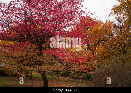 A scenic view of the colourful autumn trees in Valley Gardens in  Harrogate,England,UK - Stock Photo