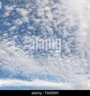 High resolution photo of sky with fluffy ( altocumulus - cirrocumulus / mackerel skies ) clouds. - Stock Photo