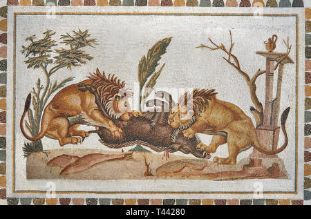 Picture of a Roman mosaics design depicting Lions eating a boar, from the ancient Roman city of Thysdrus. 2nd century AD, House of the Dionysus Procce - Stock Photo