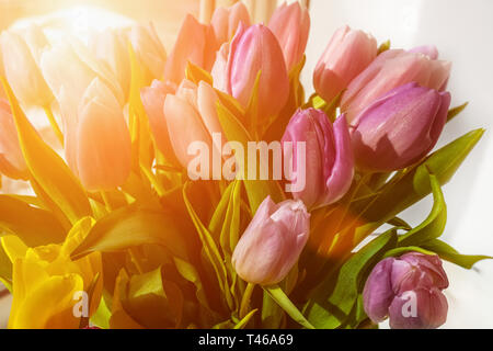 Beautiful pink tulips in a big bouquet. Congratulations. Festive background. - Stock Photo