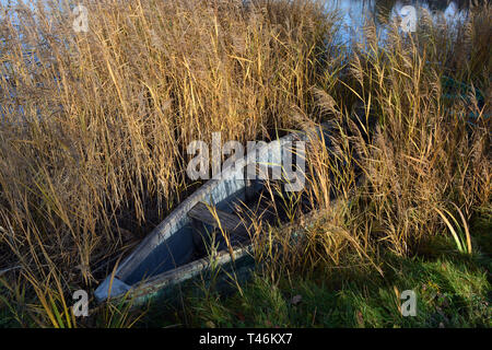 Lonely old wooden fishing boat on autumn lake coast and bulrush - Stock Photo