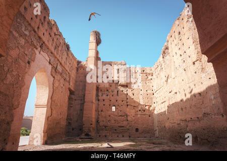Störche in Marrakesch - Stork in Marrakech - Stock Photo
