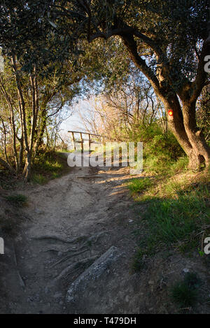 Beautiful walkway through the forest in Strunjan, a forest all the way to the sea, 'golden hour' sunlight, vertical landscape - Stock Photo