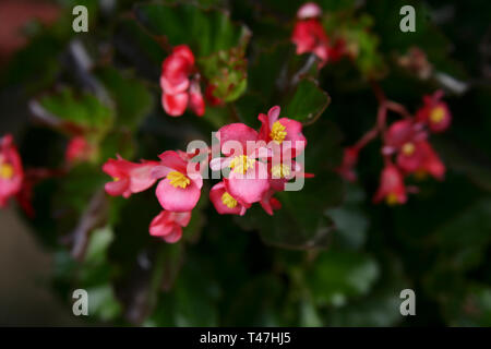 The red flowers are very cute - Stock Photo