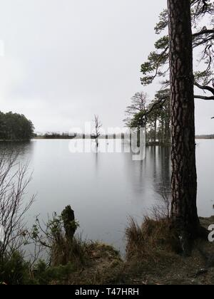 Scotland: Loch Garten nature reserve - Stock Photo