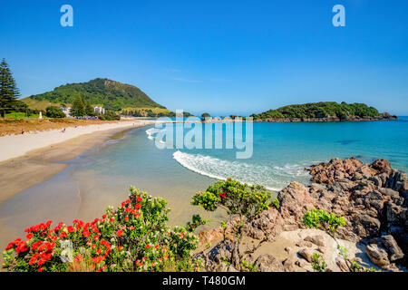 9 December 2018: Mount Maunganui, New Zealand - Mount Maunganui and Moturiki Island, with pohutukawa bushes in foreground. - Stock Photo
