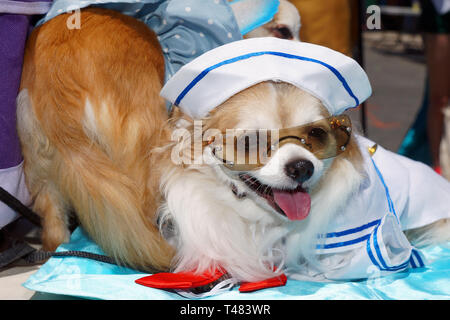 Dog at Mermaid Parade on Coney island - Stock Photo