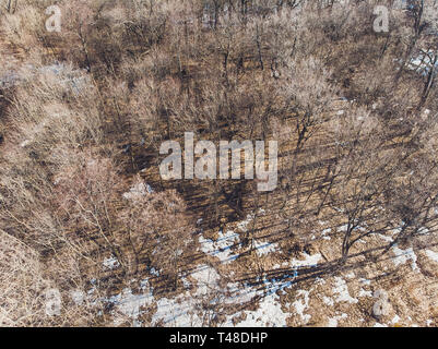 View of the tops of the pine trees in winter forest from the ground. Bottom View Wide Angle Background. - Stock Photo