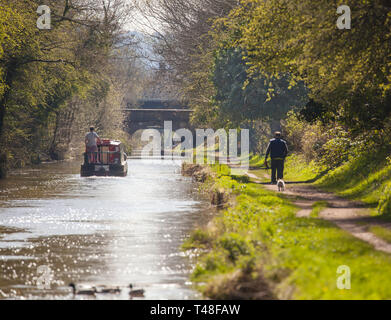 Narrow boat on the Macclesfield canal waterway at Buglawton congleton Cheshire England UK with man walking dog along the towpath - Stock Photo