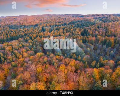 Autumn mixed forest, near Munsing, drone shot, Upper Bavaria, Bavaria, Germany - Stock Photo