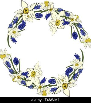 Spring wreath with with daffodils and mouse hyacinth isolated on white background. Blooming daffodils. - Stock Photo