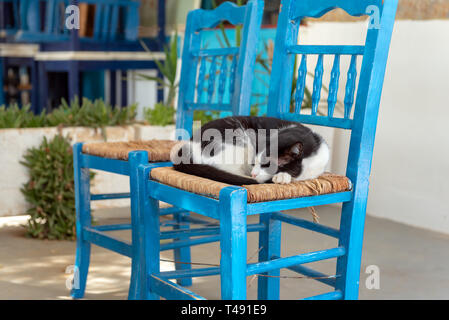 A cat sleeping in a blue chair. Island of Sifnos, Greece - Stock Photo