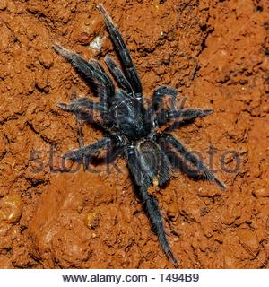 black spider on brown surface - Stock Photo