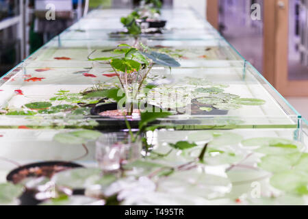Open fresh water fish tanks displayed in store. - Stock Photo