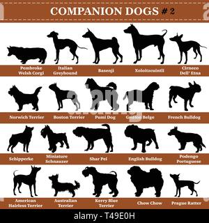 Set of 20 companion dogs. Vector set of companion breeds dogs standing in profile. Isolated dogs breed silhouettes set in black color on white backgro - Stock Photo