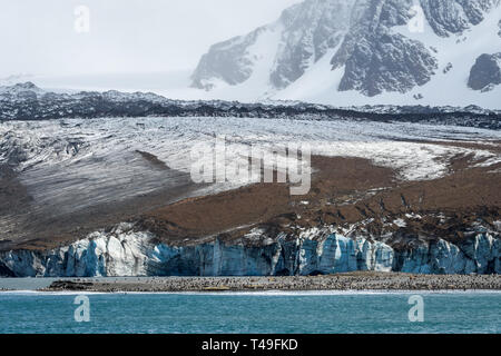 Glacier at St. Andrews Bay with a large King Penguin colony on the beach, South Georgia, southern Atlantic Ocean - Stock Photo