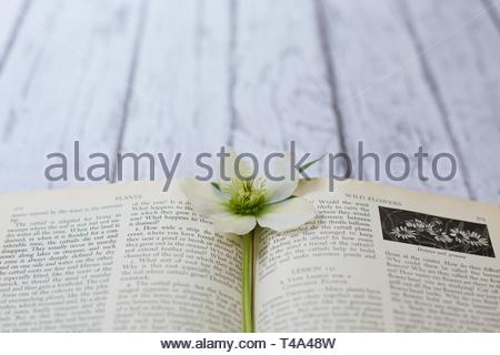 Still life of wildflower and wildflower book. - Stock Photo