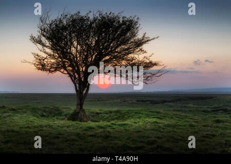 Sunset at Penclawdd estuary - Stock Photo