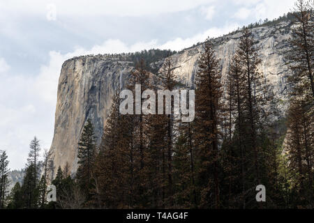 El Cap - Stock Photo