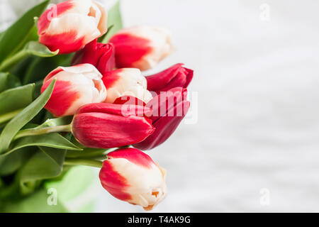 bright bouquet of red with white tulips for congratulations - Stock Photo