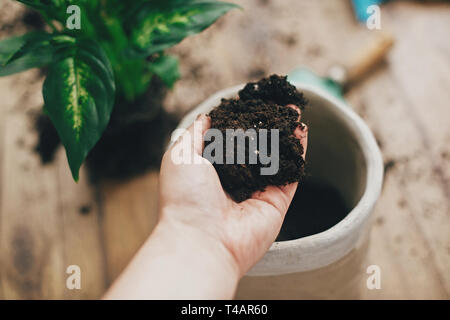 Repotting plant concept. Dirty hand holding new soil at empty new pot and gardening stylish tools, green plant on wooden floor. Preparing for repottin - Stock Photo