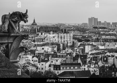 Gargoyle of Notre Dame de Paris, look down from the roof of the cathedral. Black and white photo. - Stock Photo