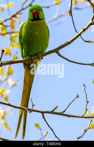 parrot perched on a  jungle branch  colorful macaw parrot - Stock Photo