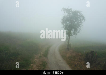 Narrow path in the fog beside tree from above - Stock Photo