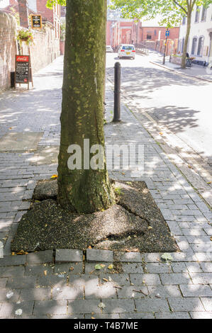 Damage caused by tree roots to pavement in urban environment. - Stock Photo