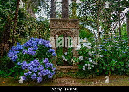 Hortensien (Hydrangea), Monte Palace Tropical Garden, Monte, Funchal, Madeira, Portugal - Stock Photo