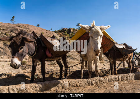 Ethiopia, Axum, donkeys in the ruins of the baths of the Queen of Saba - Stock Photo