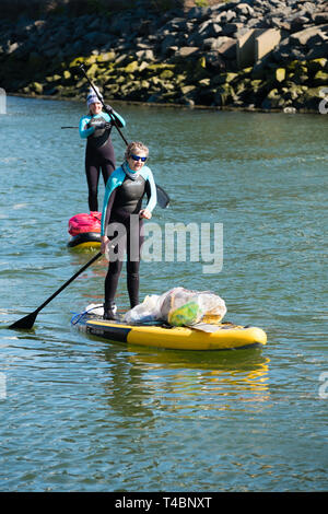 Two adult women on stand up paddleboards voluntarily taking part in  a river clean , picking up plastic  and other types of rubbish, organised by Aberystwyth Beach Buddies / Gwerin y Glannau along the river Rheidol in Aberystwyth, Wales UK - Stock Photo