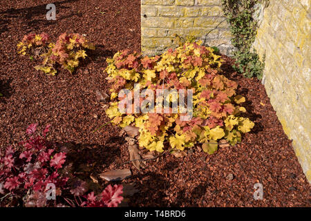 Gravelines, Nord Department, France, 26th March 2019, General View, Small formal Walled Garden, Spring Colours © Peter Spurrier, - Stock Photo