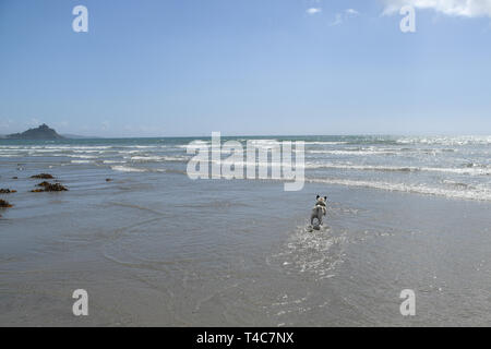 Longrock, Cornwall, UK. 16th Apr, 2019. UK Weather. Hot and sunny on the beach at Longrock, Cornwall for Titan the Pug's lunchtime walk. Credit: Simon Maycock/Alamy Live News - Stock Photo