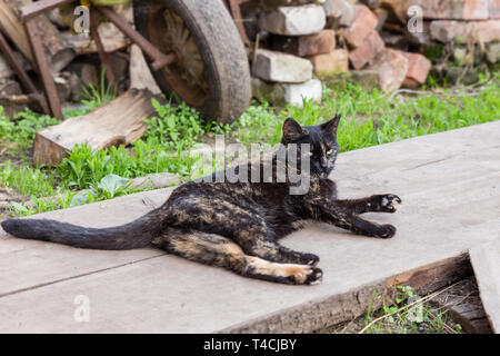 beautiful black cat lying on the boards in the street - Stock Photo