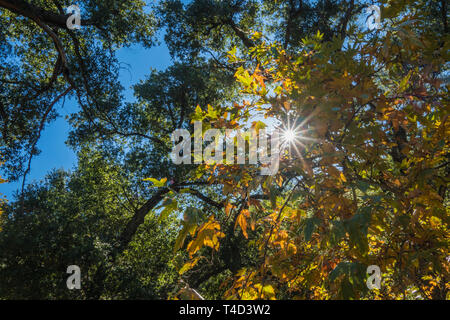 Midday sunlight shines down through the leaves of a forest canopy. - Stock Photo