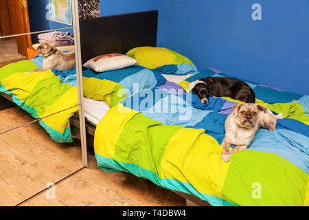 Two dogs lying in a bed - Stock Photo