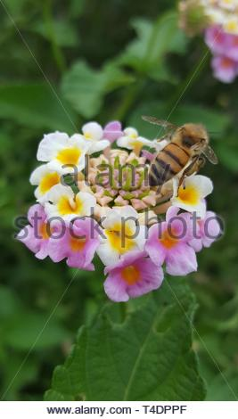 a bee feeding on flower - Stock Photo