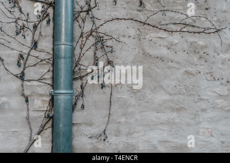 Polished drainpipe on gray plastered wall and branches - Stock Photo