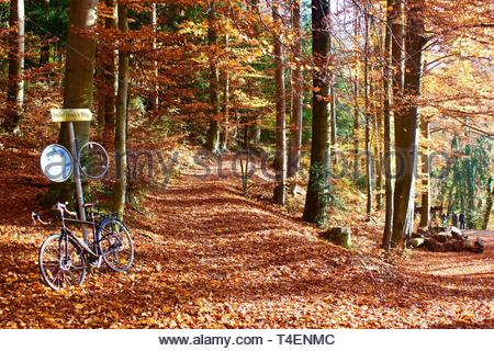 path in a forest area - Stock Photo