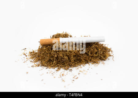 Cigar on a stack of natural tobacco on white background. A cigarette is a dried plant normally of tobacco. - Stock Photo