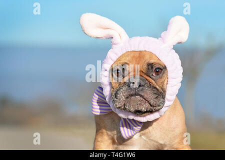 Funny looking French Bulldog female dog dressed up with easter bunny costume headband and bowtie - Stock Photo