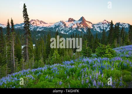 Paradise area at Mount Rainier National Park, Washington State, USA - Stock Photo