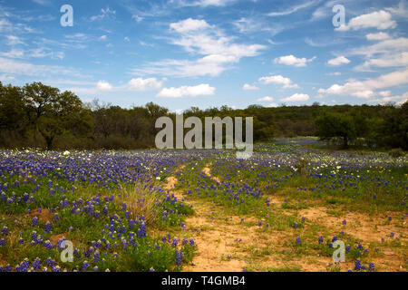 Old Road Through a field of Wild Flowers in Hill Country, Texas - Stock Photo